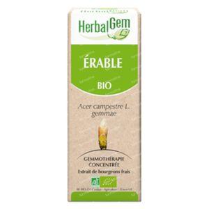 Herbalgem Erable Champetre Macerat 50 ml
