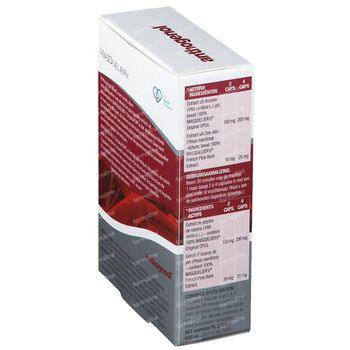 Masquelier's Anthogenol 60 capsules